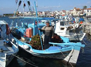 Boats in Aegina harbour