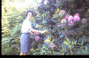 Thelma Tearle and the rhododendrons