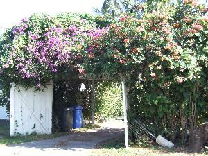 O'ahu garden